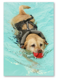 Canine Hydrotheray